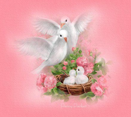 deux belles colombes