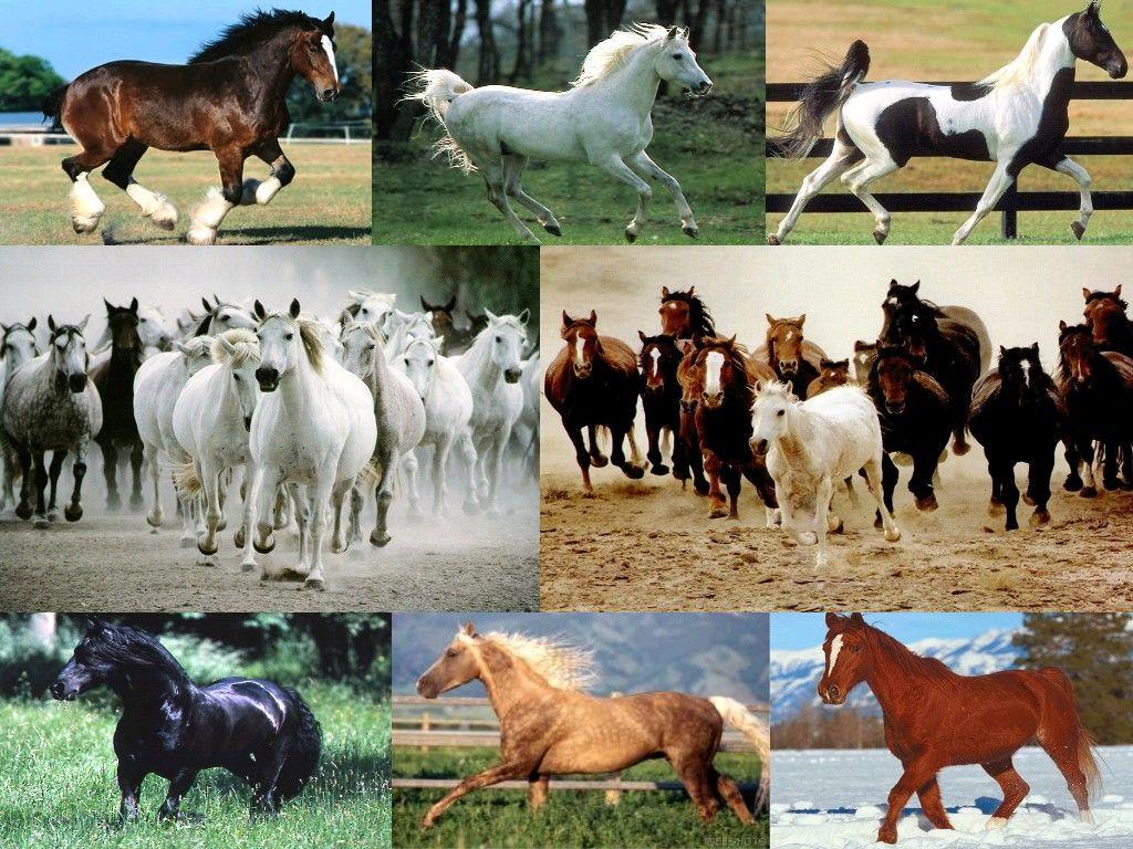Histoires de cheval gratuit
